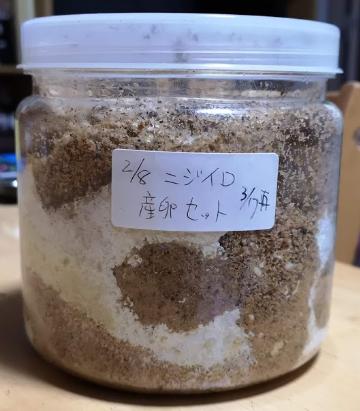 オオクワガタ 菌糸 ビン